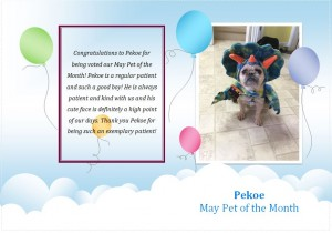 Pekoe Pet of the Month