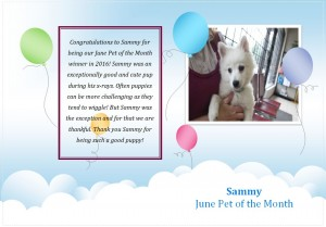 Sammy Pet of the Month